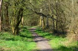 Rance - Forêt Domaniale et ses randonnées balisées