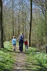 Sautin - Promenade du Bois de Bruyère