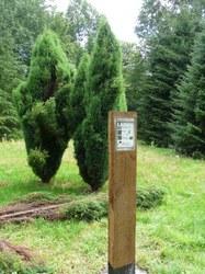 Sautin - Arboretum du Bois de Bruyère