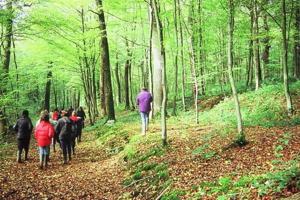 """Bois de BruyA""""re"""